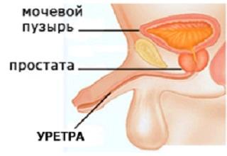 Оргазма у мужчин от стимуляции простаты