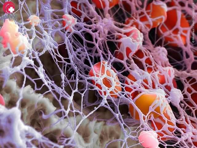 безъядерные плоские клетки