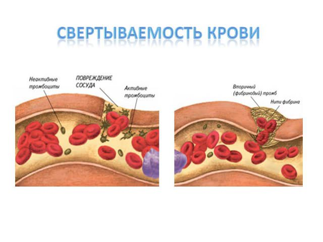 Свёртывание крови связано с выработкой