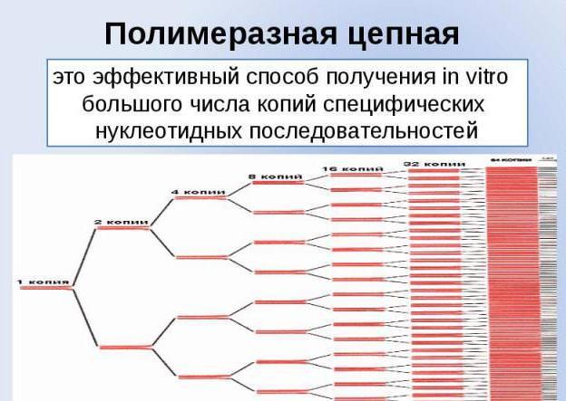 ПЦР схема