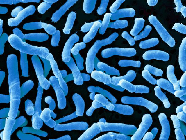 бифодобактерии