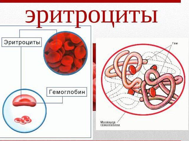 общий осмотр крови