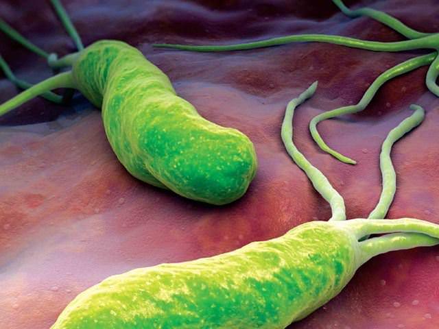 бактерия опасность