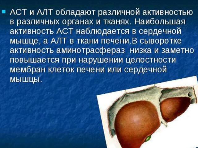 аст в крови человека