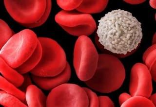 Анализ стерильность крови