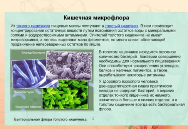 Условно-патогенные бактерии в анализе мочи Справка 302Н Орехово