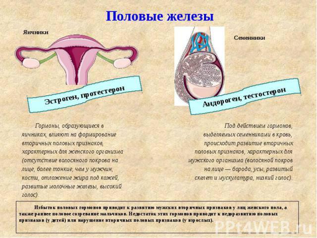 Женские гормоны нарушение