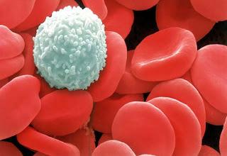 Анализ крови на лейкоциты обозначение в анализах