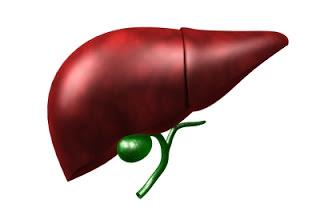 Анализ крови щелочная фосфатаза ее норма и отклонение